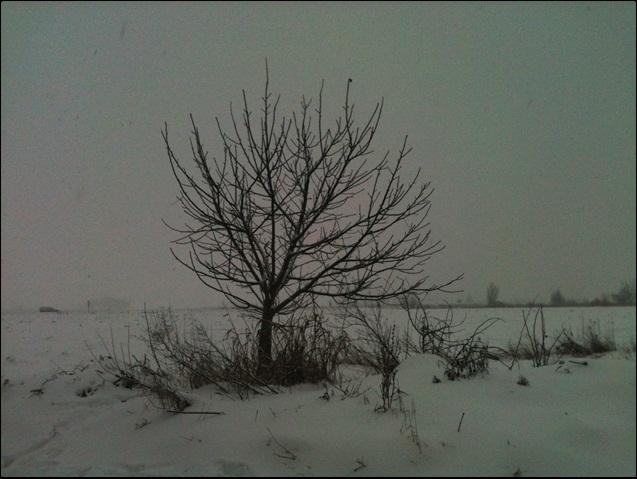 Motiv fotografiranja: Zima i snijeg - Page 3 2014-021