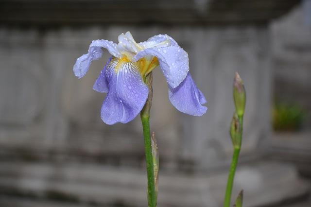 Motiv fotografiranja: Biljke, Cvijeće, Cvijet, Drveće... - Page 2 Dsc_0110