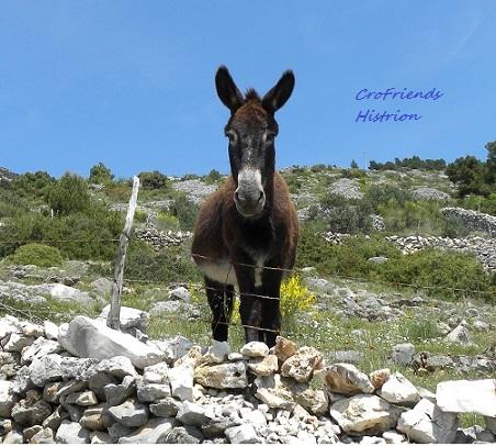Pobjedničke fotografije natječaja CroFriends foruma Ograda12