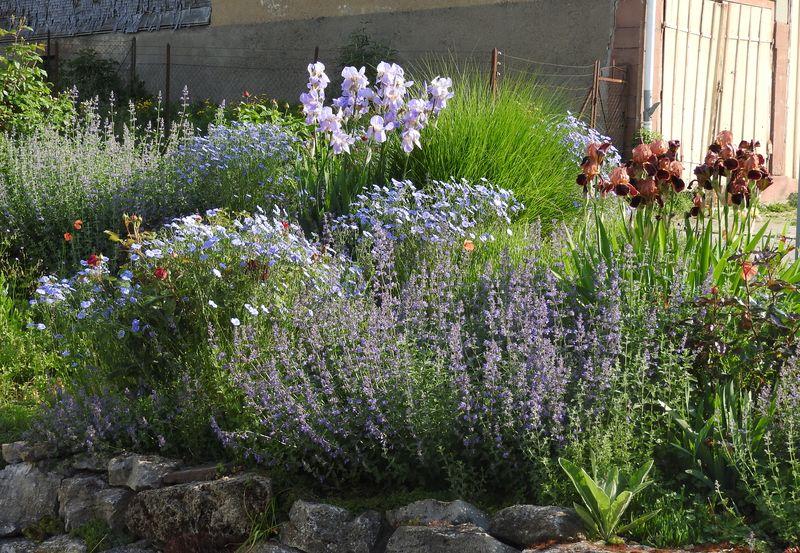 Schwertliliengewächse: Iris, Tigrida, Ixia, Sparaxis, Crocus, Freesia, Montbretie u.v.m. - Seite 28 Irisbe10