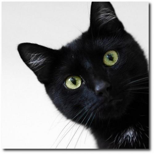 Funny/Cute Animal Pics Black-31