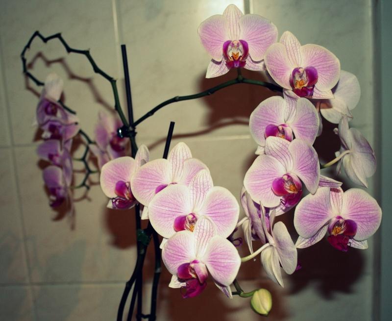 Einzigartige Blüte Img_9810