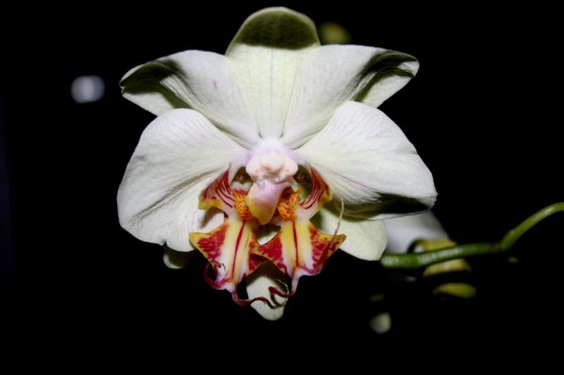 Einzigartige Blüte Jp_04710