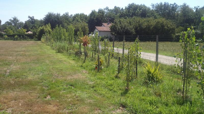 permaculture et autres jeux de jardin Dsc01210