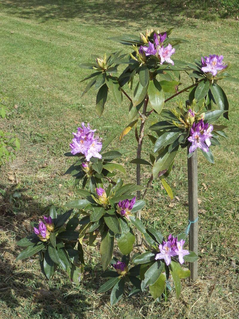 Peut-on sortir des orchidées semi-rustiques dès avril ? Dsc01610