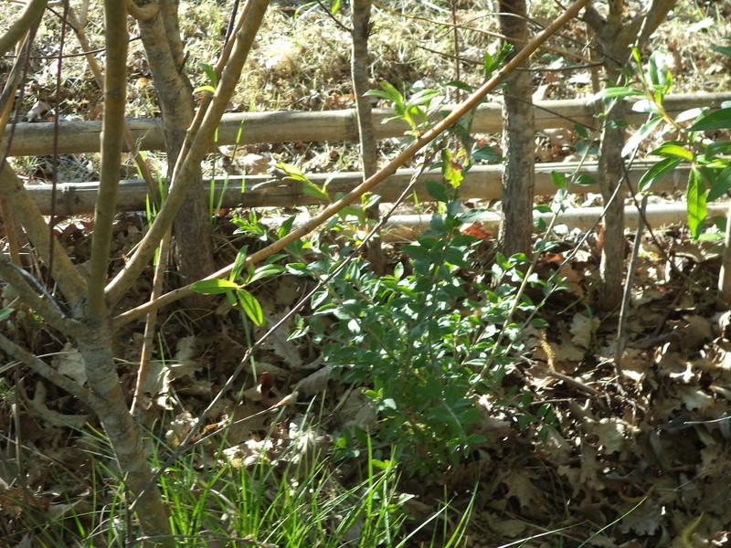 permaculture et autres jeux de jardin Dsc01613