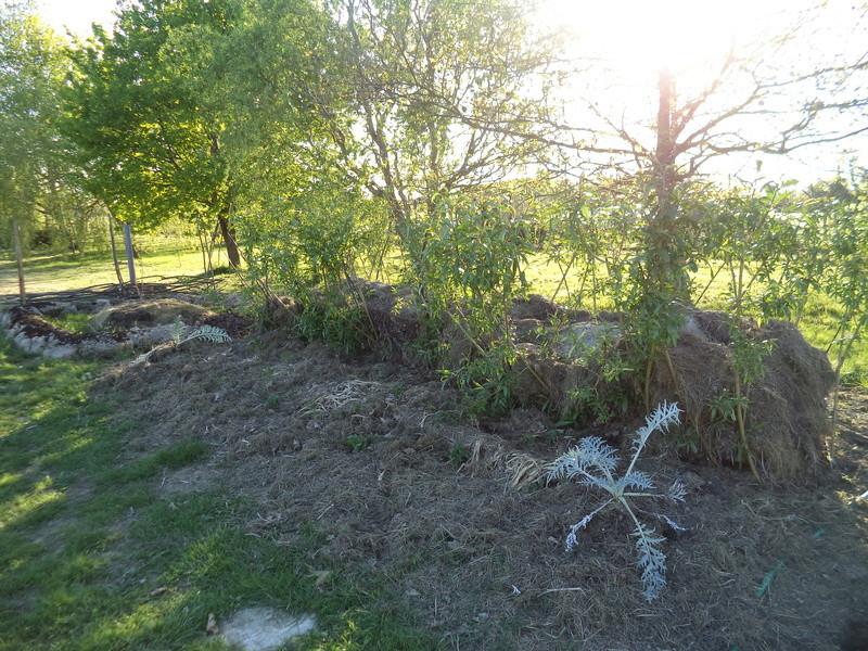 permaculture et autres jeux de jardin Dsc01614