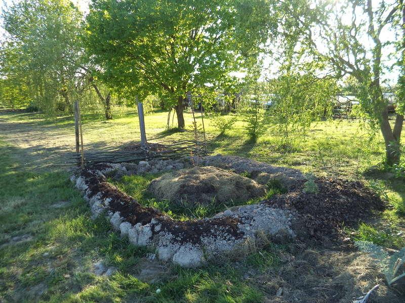 permaculture et autres jeux de jardin Dsc01615