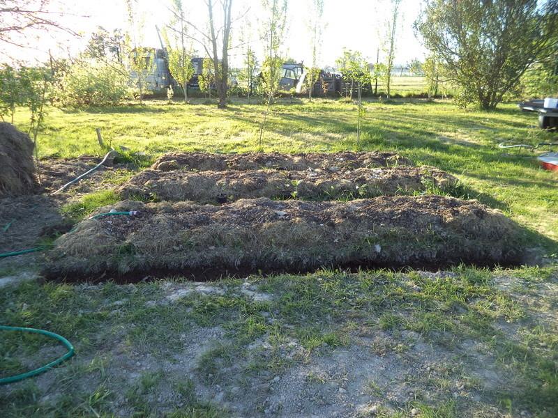 permaculture et autres jeux de jardin Dsc01617