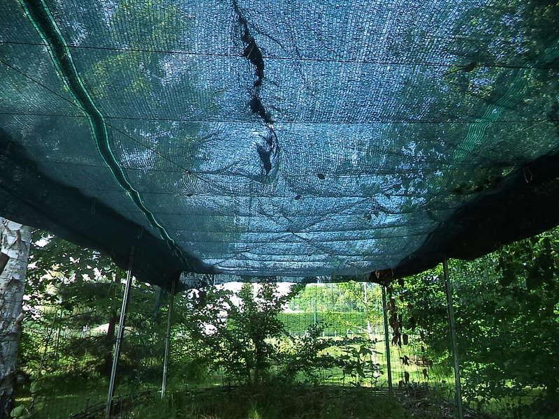 permaculture et autres jeux de jardin Dsc01810