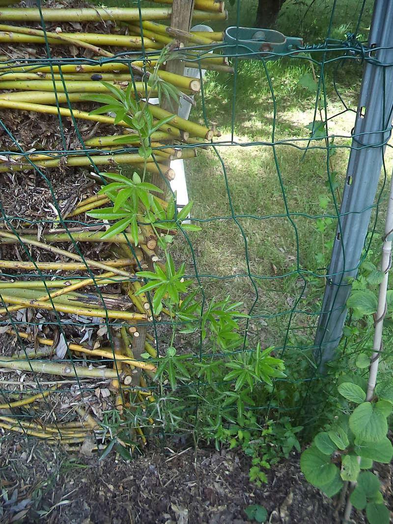 permaculture et autres jeux de jardin Dsc01812