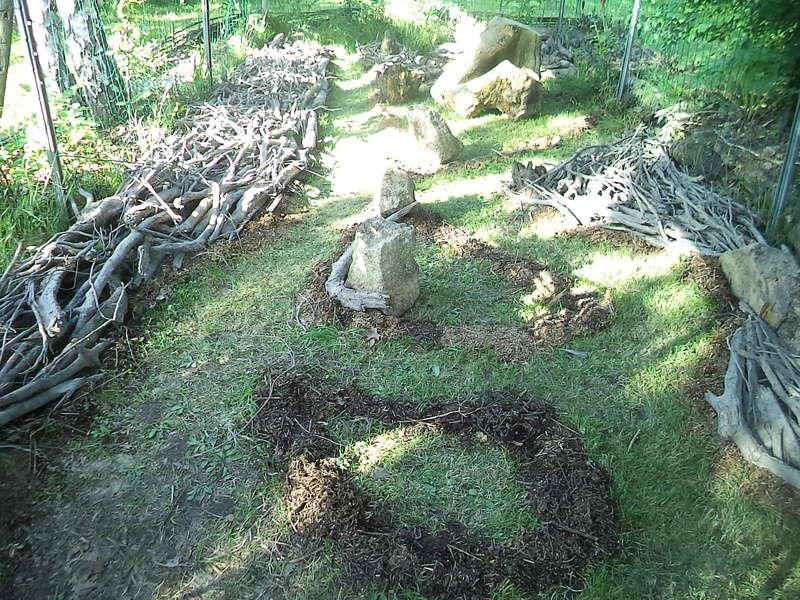 permaculture et autres jeux de jardin Dsc01911