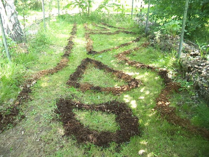 permaculture et autres jeux de jardin Dsc01913