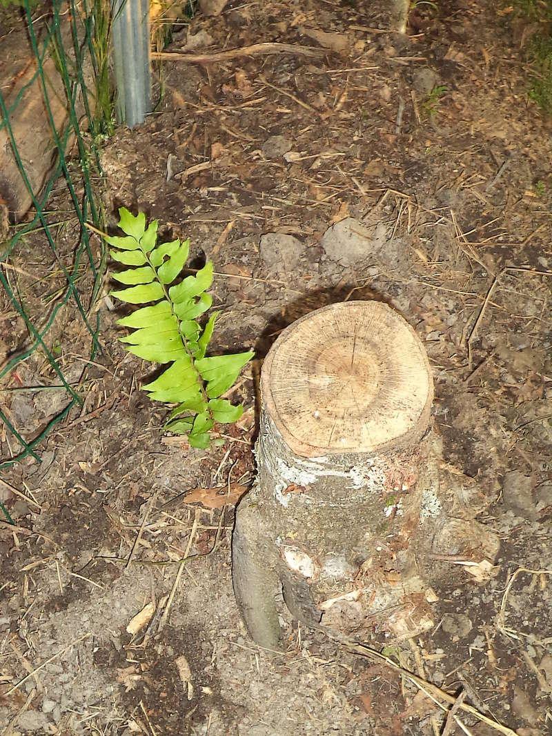 permaculture et autres jeux de jardin - Page 2 Dsc02027