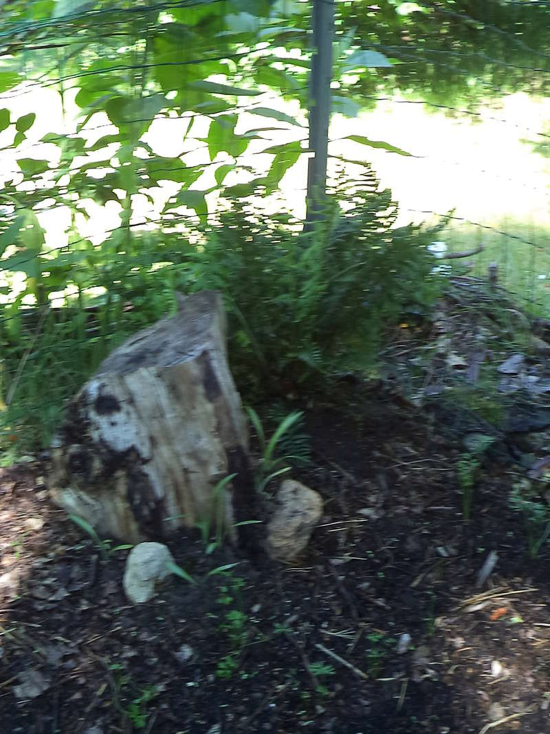 permaculture et autres jeux de jardin - Page 2 Dsc02045