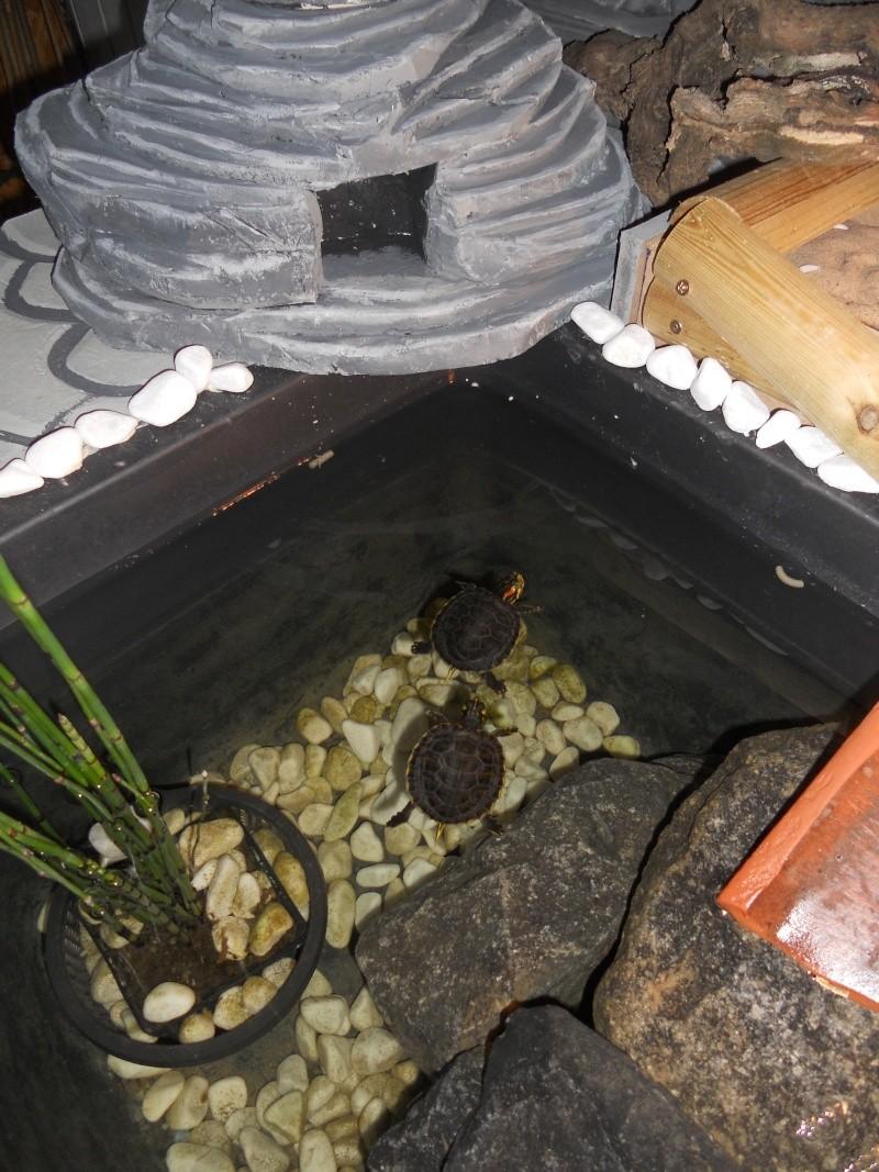 Bonjour à tous voici notre dernière réalisation de notre étang d'intérieur  1810