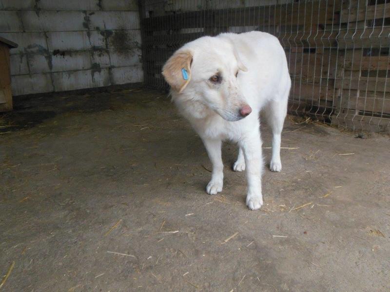 BALANUCH, mâle croisé berger sauvé de Pallady, né en 2009 parrainé par Nathalie G. -Gage Coeur  Myri_Bonnie-SC-R-SOS- 17359111