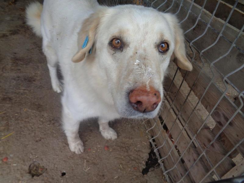 BALANUCH, mâle croisé berger sauvé de Pallady, né en 2009 parrainé par Nathalie Gamblin-Gage Coeur  Myri_Bonnie-SC-R-SOS- 17504512