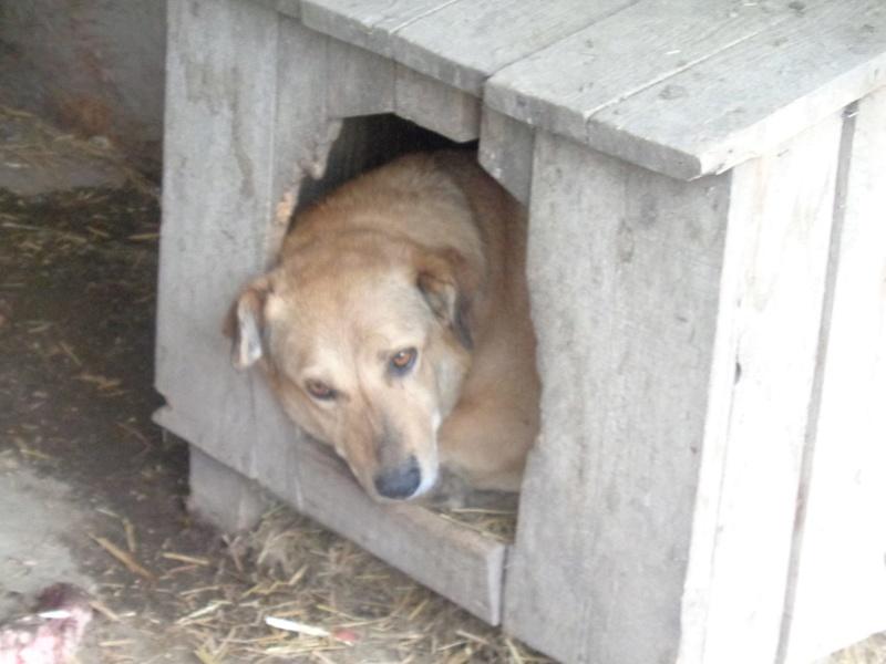 BAILEYS, née en 2011, sauvée de l'équarrissage - parrainée par Nathalie -SOS-R-SC - Page 2 17504513