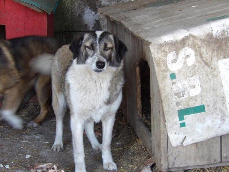 LOGAN (gabarit petit/moyen) - né en 2014 EN FA DANS LE 60, rescapé d'Oltenita, parrainé par Fanfounette et Mirko78 - R-SOS-SC-30MA - Page 3 17966610