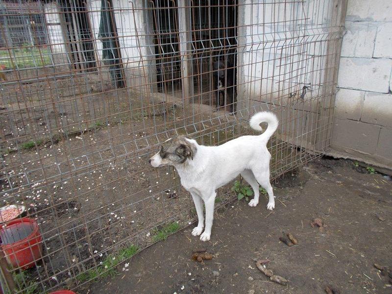 IRIS, née en 2015 - sauvée de la rue - Parrainée par Perdita -  OANA -SC-R-SOS- 18446610