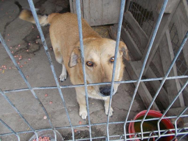 BAILEYS, née en 2011, sauvée de l'équarrissage - parrainée par Nathalie -SOS-R-SC - Page 2 18447410