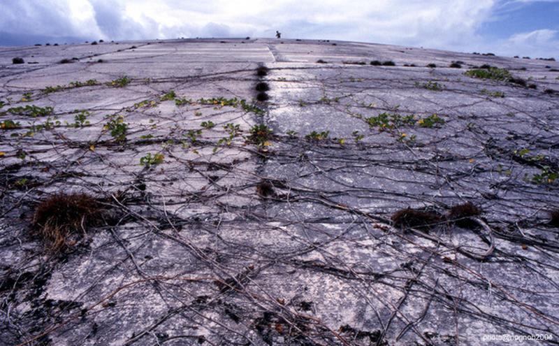 Cactus dome - Iles Marshall - USA Bahbcv16