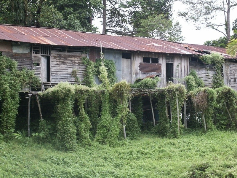 Les Dayaks - Bornéo Borneo15