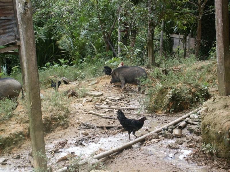 Les Dayaks - Bornéo Borneo18