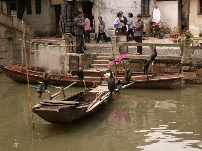 Le pêcheur aux cormorans - Chine Chine115