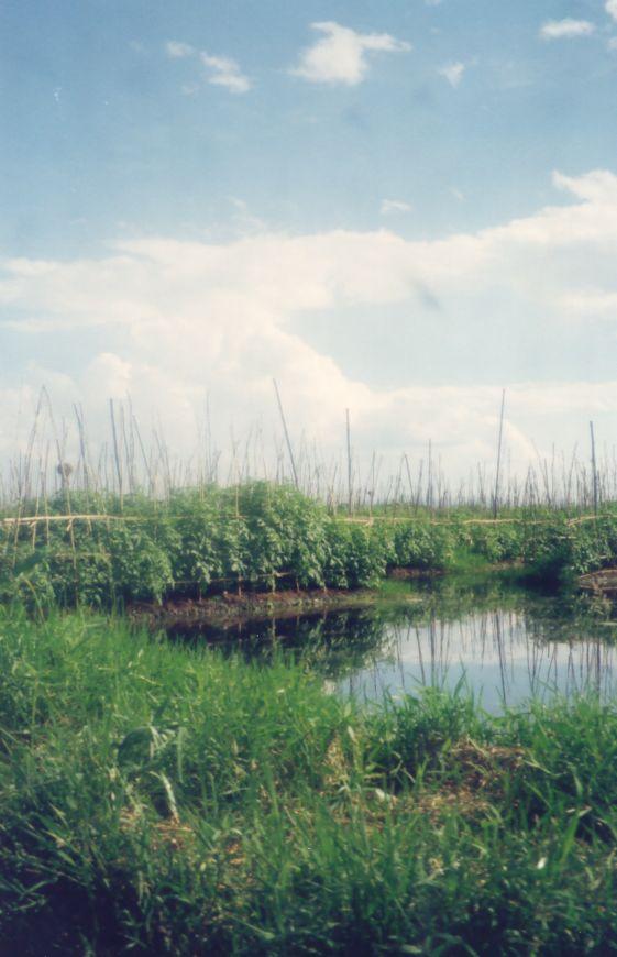 Le lac inlé - Myanmar Photo_41