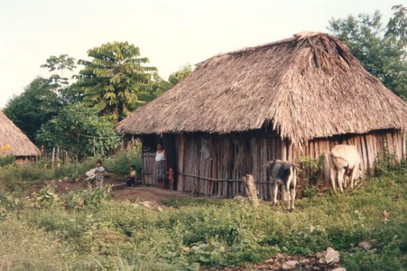 Les Mayas - Mexique Photo_53