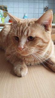 Orson, magnifique rouquin 17022110