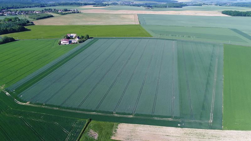 suivi des blés tendre 2017 Dji_0110