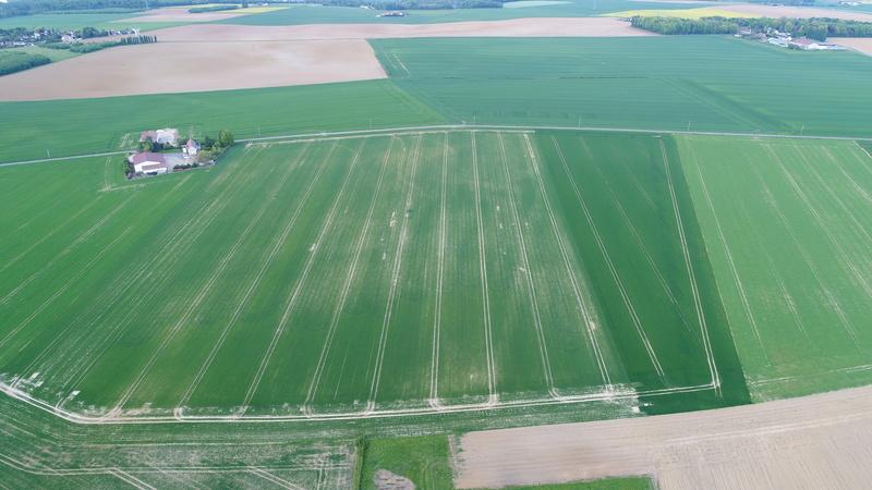 suivi des blés tendre 2017 Dji_0111