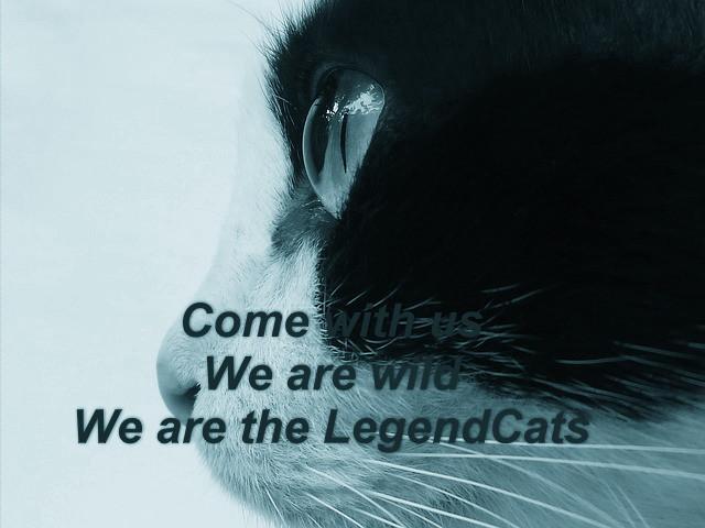 Warrior Cats ~ eine Legende wird wahr