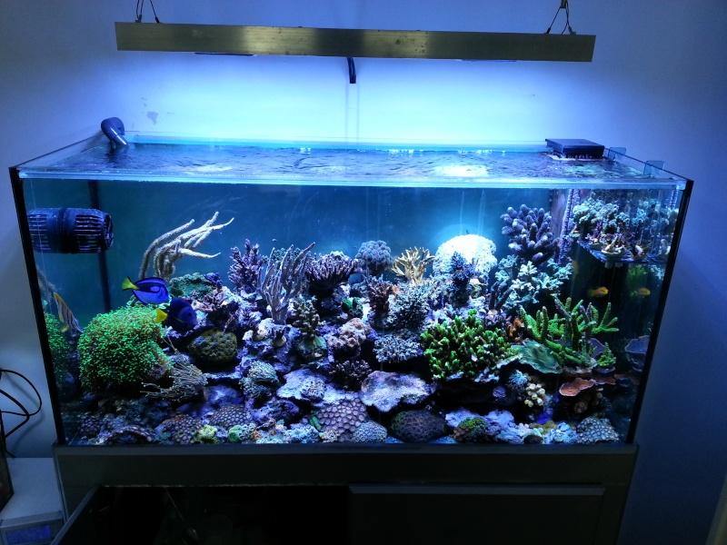 "Présentation de mon aquarium ""caterham"" 20130712"