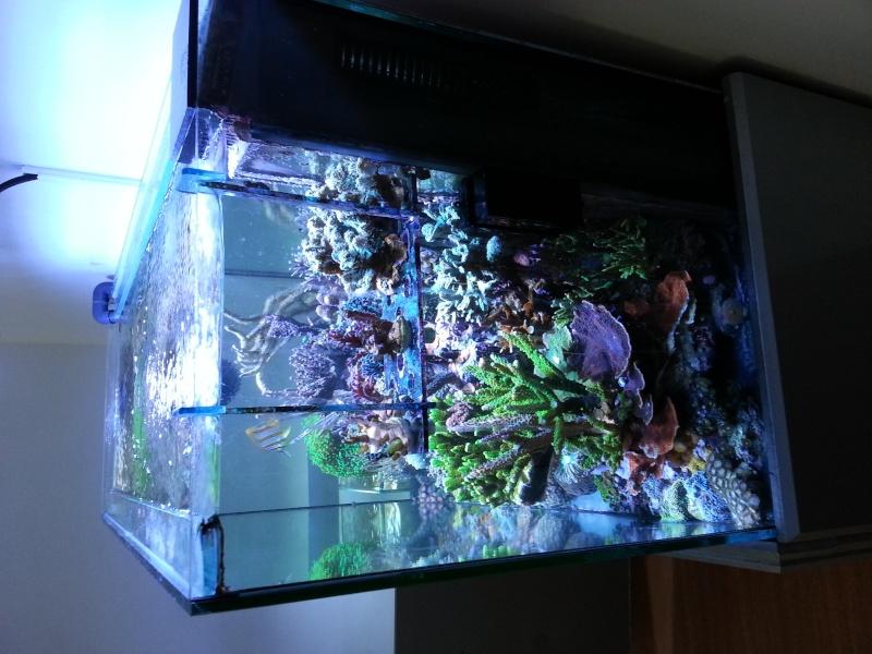 "Présentation de mon aquarium ""caterham"" 20130716"