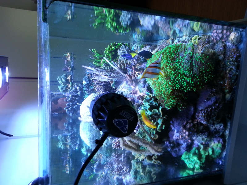 """Présentation de mon aquarium """"caterham"""" - Page 2 20130717"""