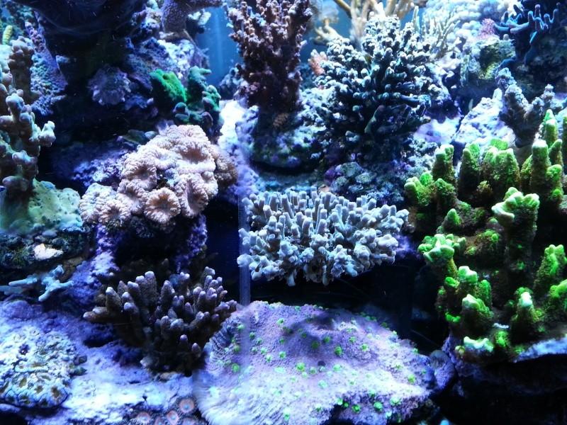 """Présentation de mon aquarium """"caterham"""" - Page 2 20130718"""