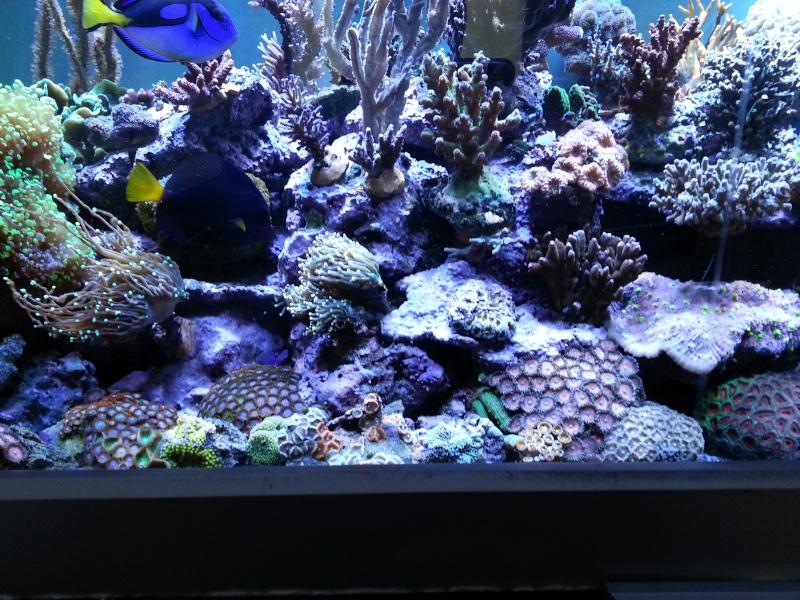 """Présentation de mon aquarium """"caterham"""" - Page 2 20130719"""