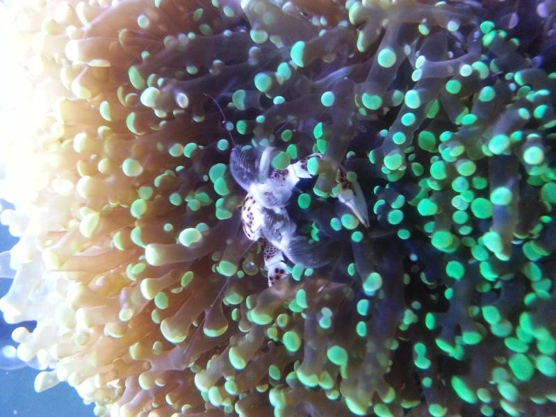"""Présentation de mon aquarium """"caterham"""" - Page 2 20130720"""