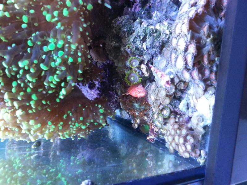 """Présentation de mon aquarium """"caterham"""" - Page 2 20130721"""