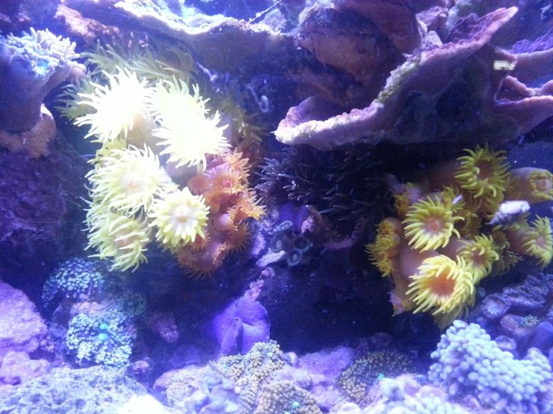"""Présentation de mon aquarium """"caterham"""" - Page 2 20130810"""