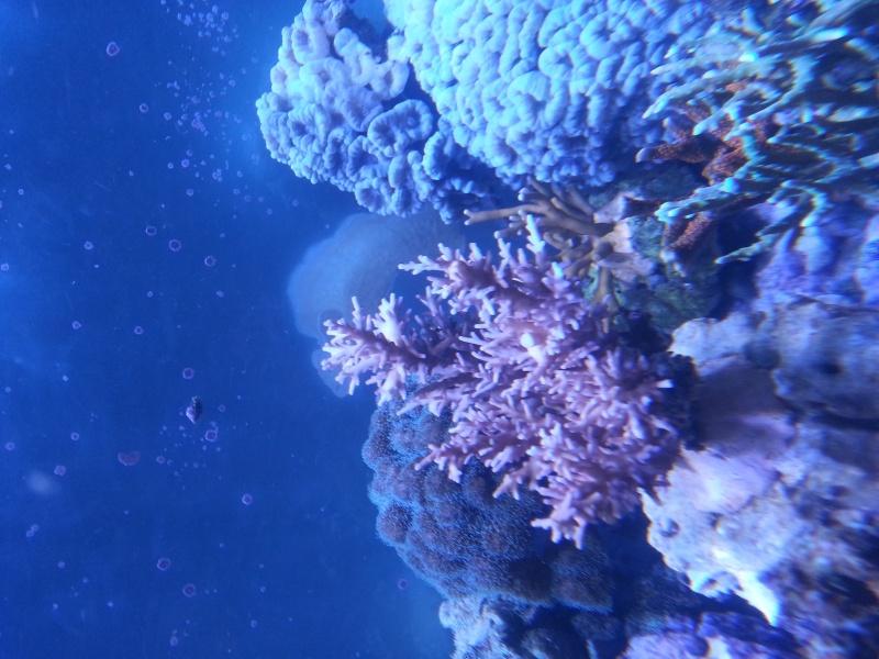 """Présentation de mon aquarium """"caterham"""" - Page 2 20130910"""