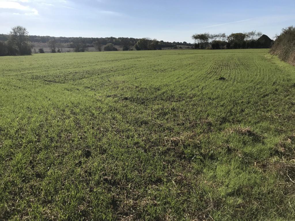 semis de cereales 2018-19 - Page 15 196cc110