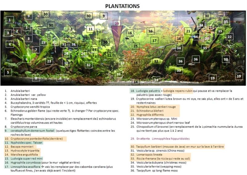 Besoin de conseil de connaisseur - choix d'une plante Plan_e11