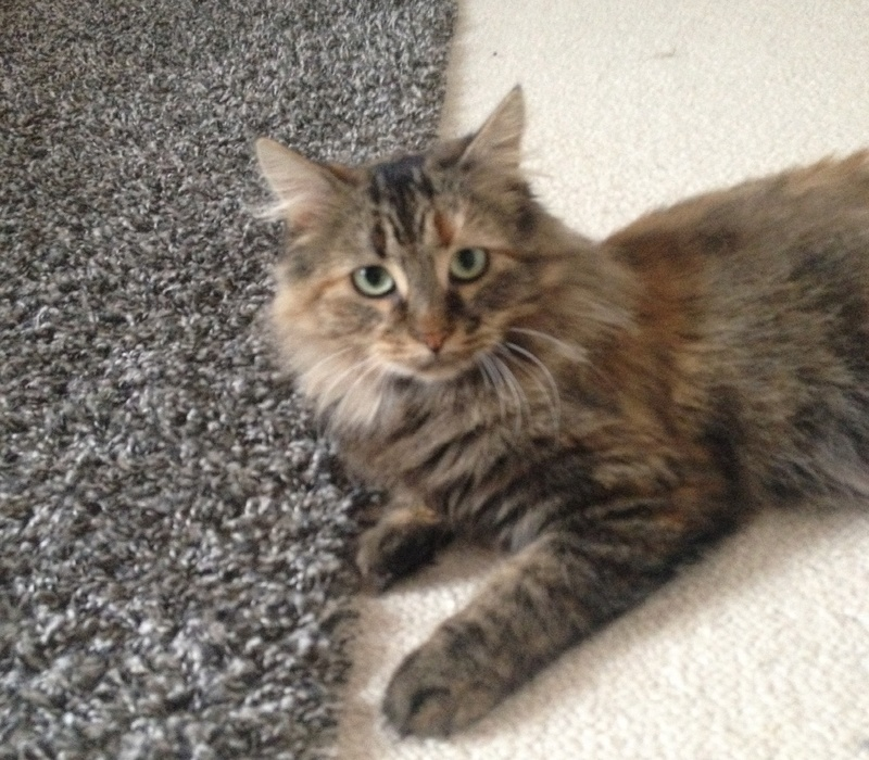 [CLOS] Visite post-adoption Olympe (chat) sur Rennes (Cleunay) Img_0410