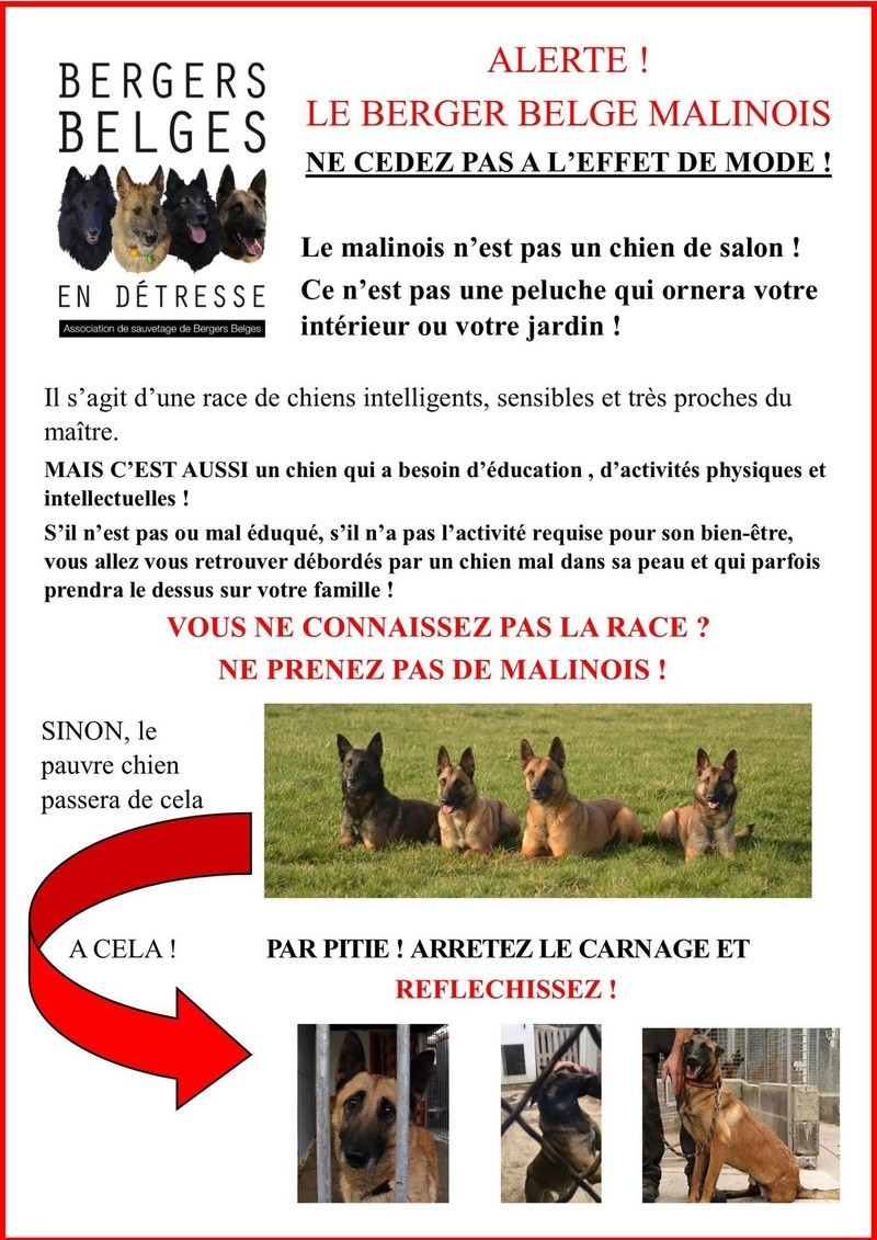 Stop aux malinois  Image11