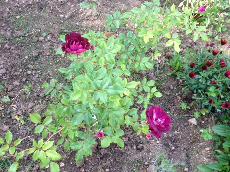 Floraisons printanières 2014 - Page 2 Burgun10